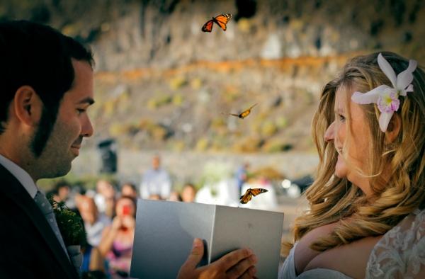 suelta de mariposas bodas
